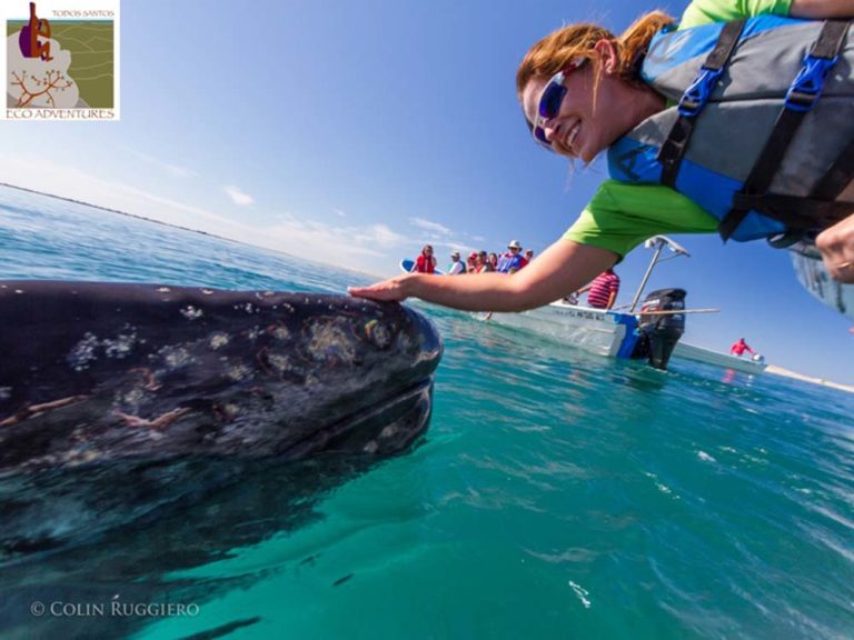Whale Touch Todos Santos Eco Adventures recommended for guests of Casa Oasis Todos Santos Vacation Rental