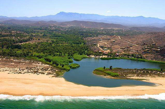 Our La Poza Lagoon provides wetlands for myriad birds just a ten minute stroll below Casa Oasis Todos Santos Vacation Rental